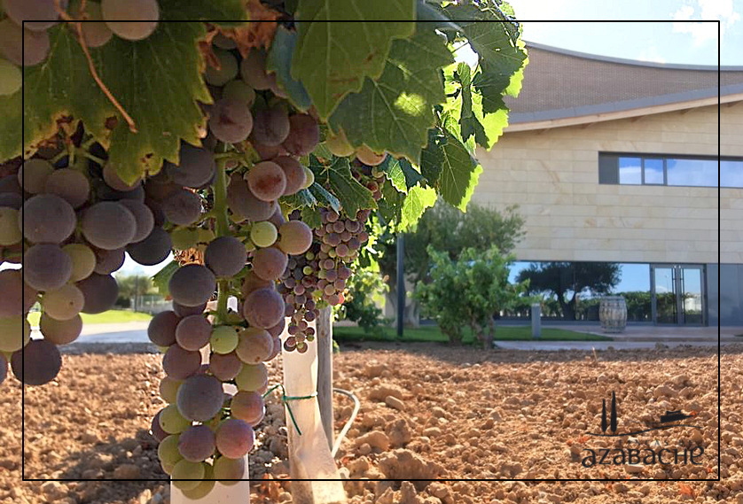 VINE GROWTH CYCLE-VERASION