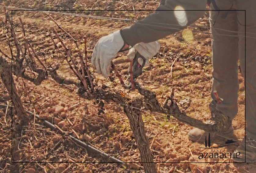 VINEYARDS - THE PRUNING