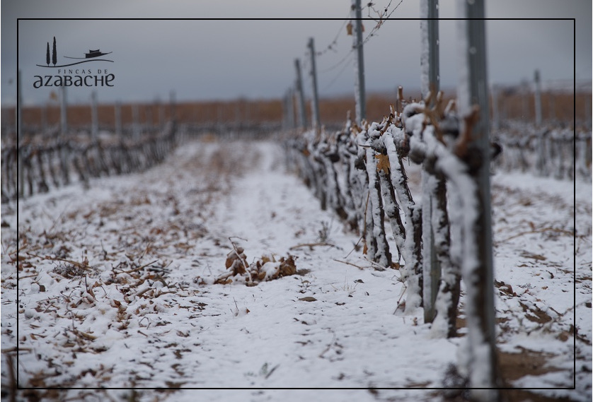 SNOW IN THE VINE YARD