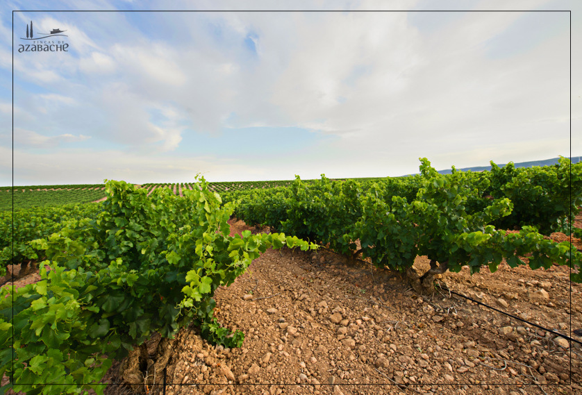 THE LAND OF RIOJA WINE